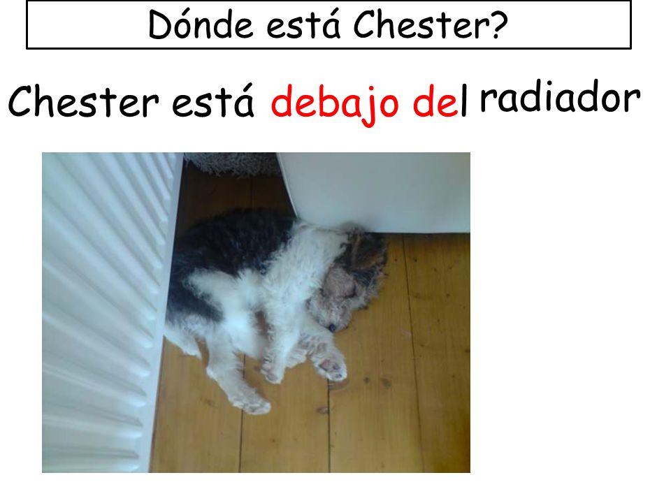 Dónde está Chester? Chester estádebajo del radiador