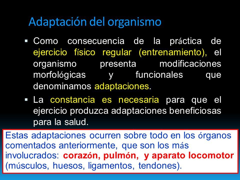 Adaptación del organismo Como consecuencia de la pr á ctica de ejercicio f í sico regular (entrenamiento), el organismo presenta modificaciones morfol ó gicas y funcionales que denominamos adaptaciones.