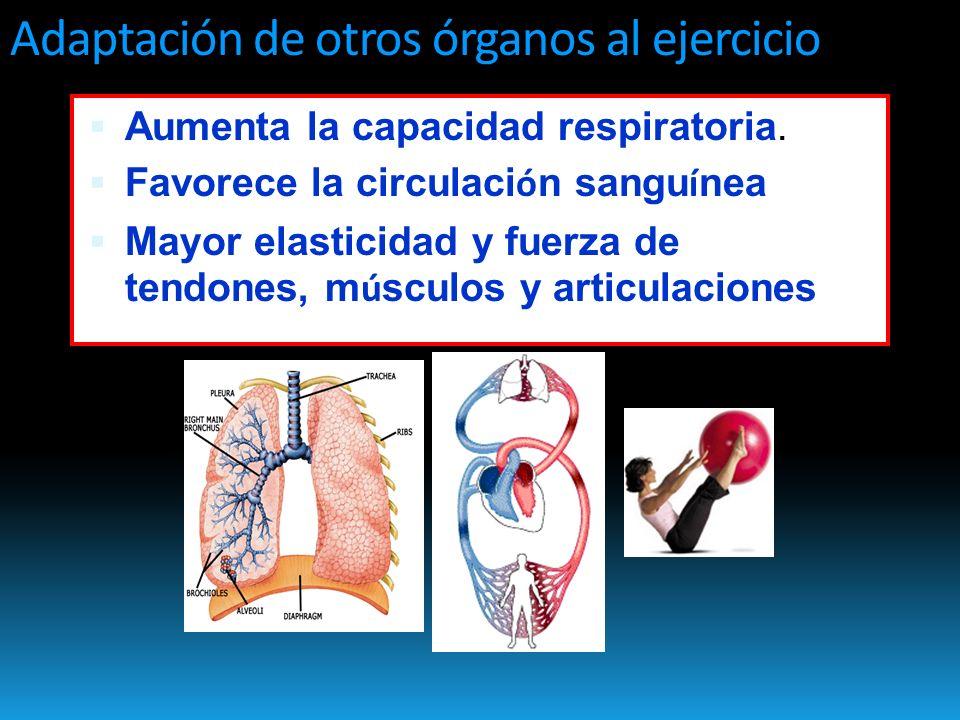 Adaptación de otros órganos al ejercicio Aumenta la capacidad respiratoria.