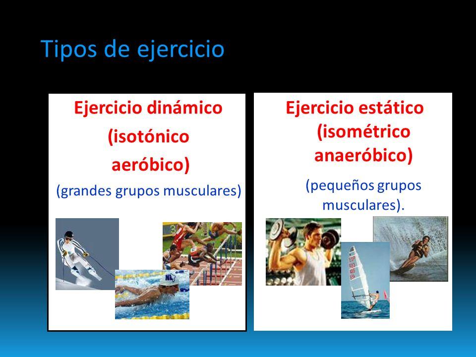 Ejercicio dinámico (isotónico aeróbico) (grandes grupos musculares) Ejercicio estático (isométrico anaeróbico) (pequeños grupos musculares).