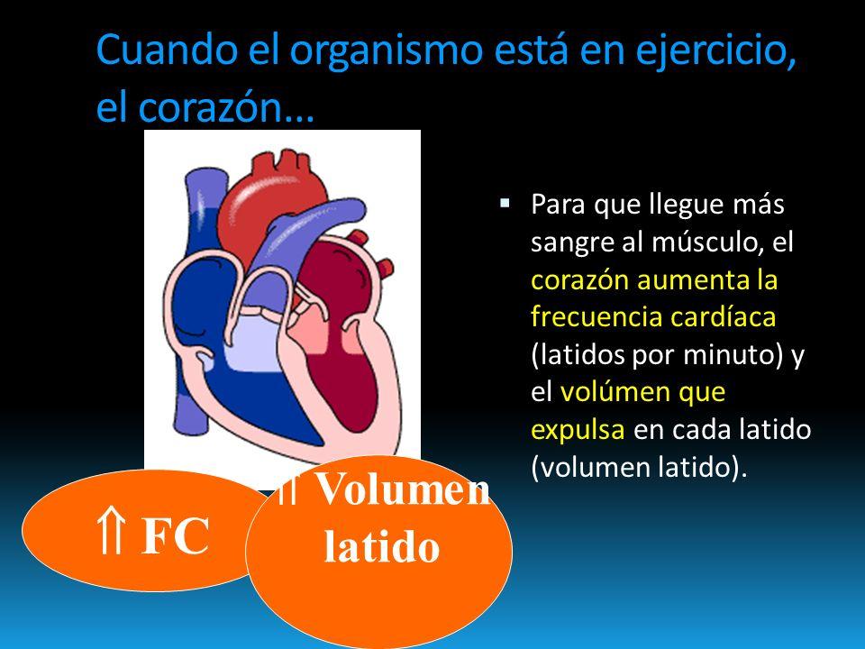 ¿Son igual de buenos para el corazón todos los tipos de ejercicio?