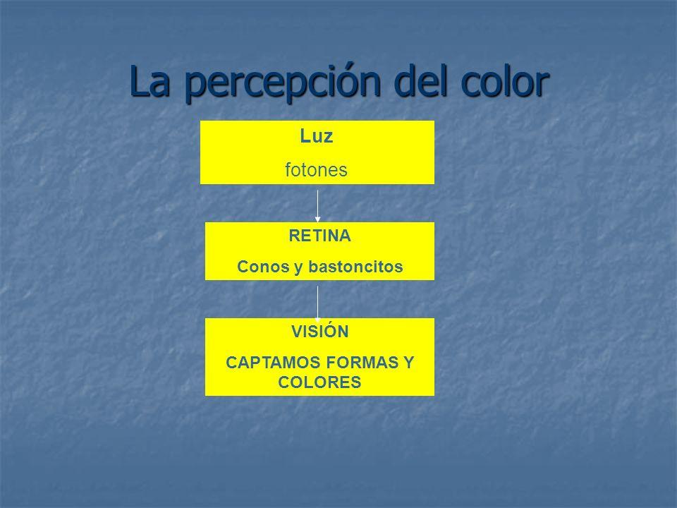 La percepción del color Luz fotones RETINA Conos y bastoncitos VISIÓN CAPTAMOS FORMAS Y COLORES