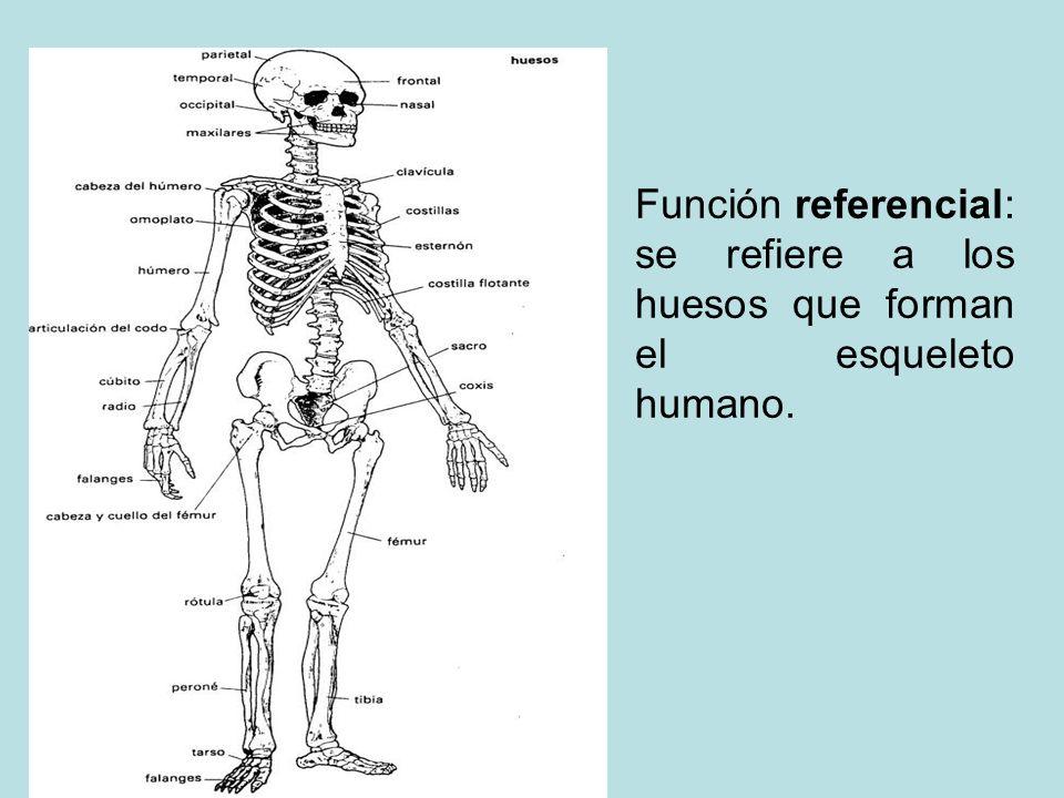 Función referencial: se refiere a los huesos que forman el esqueleto humano.