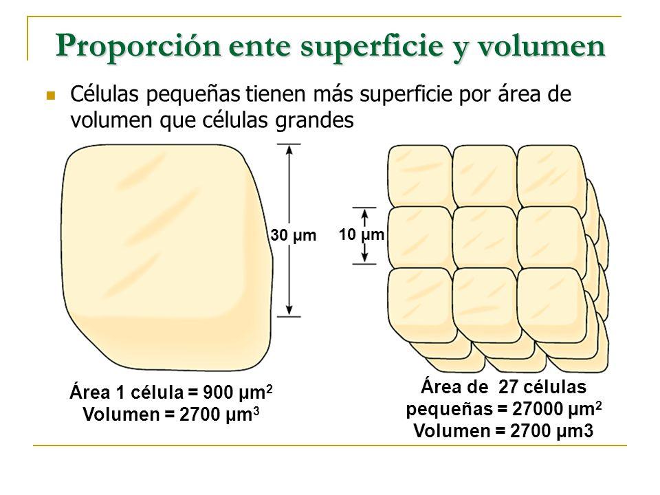 Organelas de Construcción El Núcleo Usualmente es la organela más grande en la célula.
