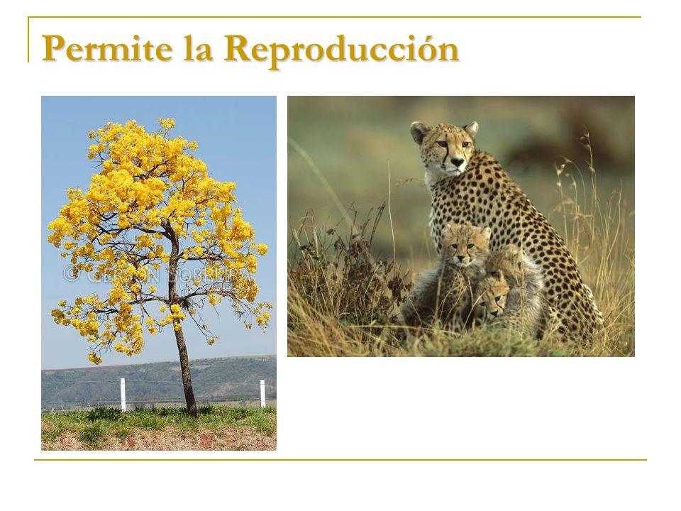 Permite la Reproducción