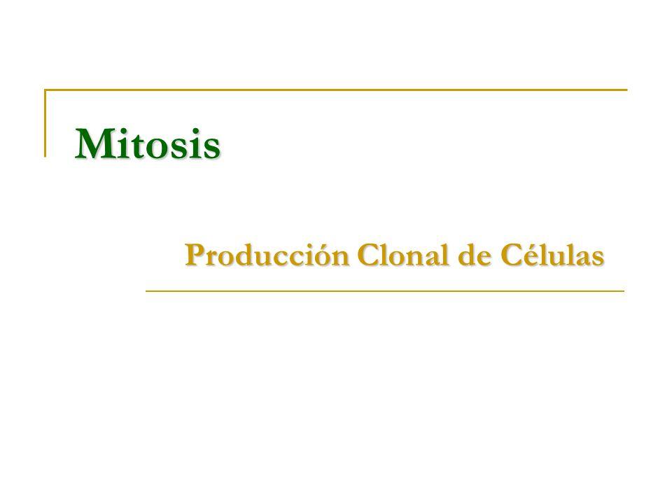 Mitosis Producción Clonal de Células
