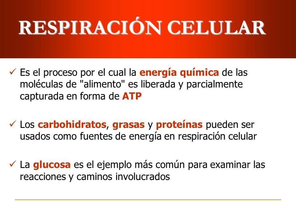 RESPIRACIÓN CELULAR Es el proceso por el cual la energía química de las moléculas de