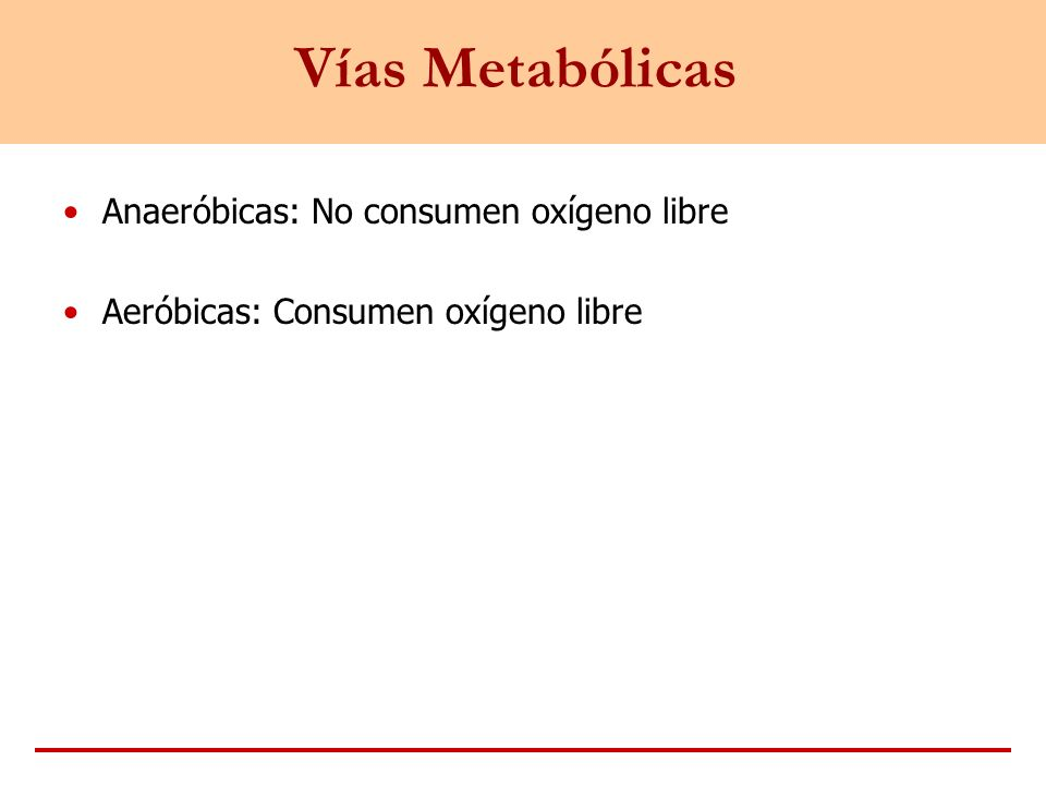 Vías Metabólicas Anaeróbicas: No consumen oxígeno libre Aeróbicas: Consumen oxígeno libre