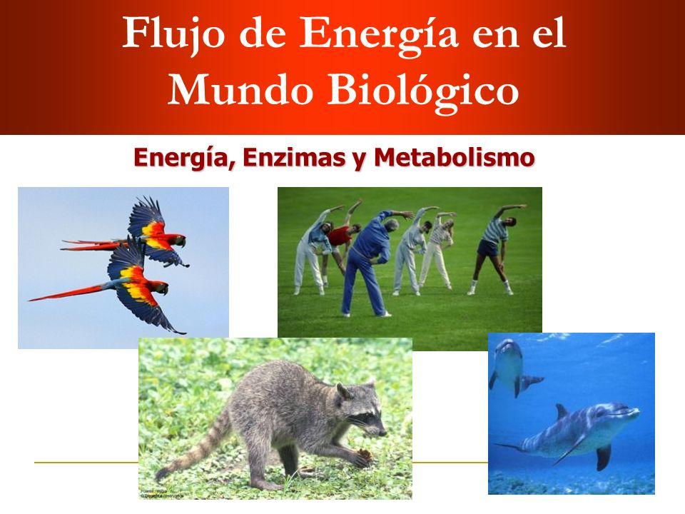 Flujo de Energía en el Mundo Biológico Energía, Enzimas y Metabolismo