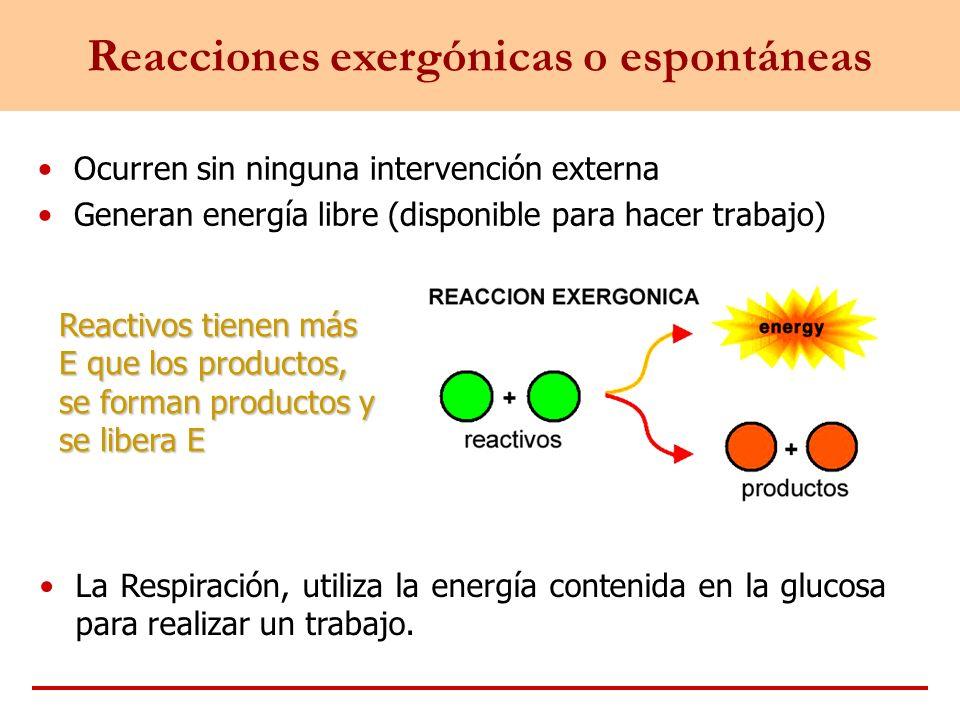 Ocurren sin ninguna intervención externa Generan energía libre (disponible para hacer trabajo) Reacciones exergónicas o espontáneas Reactivos tienen m