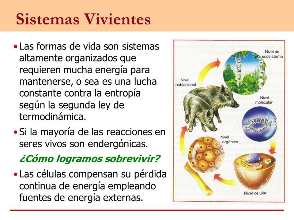 Sistemas Vivientes Las formas de vida son sistemas altamente organizados que requieren mucha energía para mantenerse, o sea es una lucha constante con