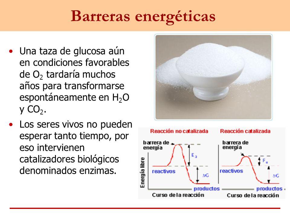 Barreras energéticas Una taza de glucosa aún en condiciones favorables de O 2 tardaría muchos años para transformarse espontáneamente en H 2 O y CO 2.