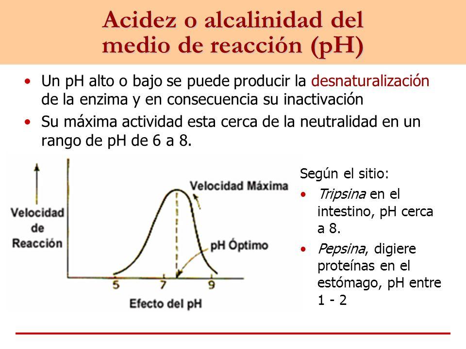 Acidez o alcalinidad del medio de reacción (pH) Un pH alto o bajo se puede producir la desnaturalización de la enzima y en consecuencia su inactivació