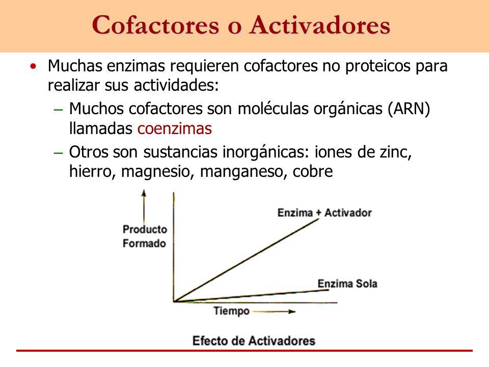 Cofactores o Activadores Muchas enzimas requieren cofactores no proteicos para realizar sus actividades: – Muchos cofactores son moléculas orgánicas (