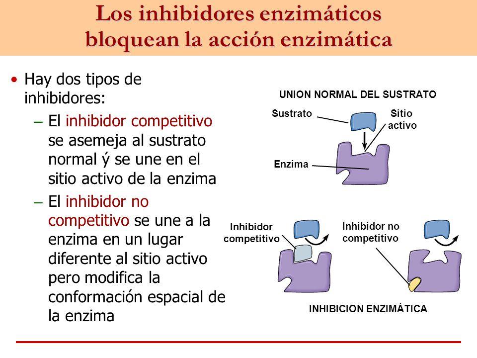 Hay dos tipos de inhibidores: – El inhibidor competitivo se asemeja al sustrato normal ý se une en el sitio activo de la enzima – El inhibidor no comp