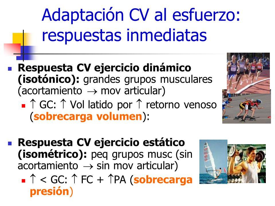 Adaptación CV al esfuerzo: respuestas inmediatas Respuesta CV ejercicio dinámico (isotónico): grandes grupos musculares (acortamiento mov articular) G