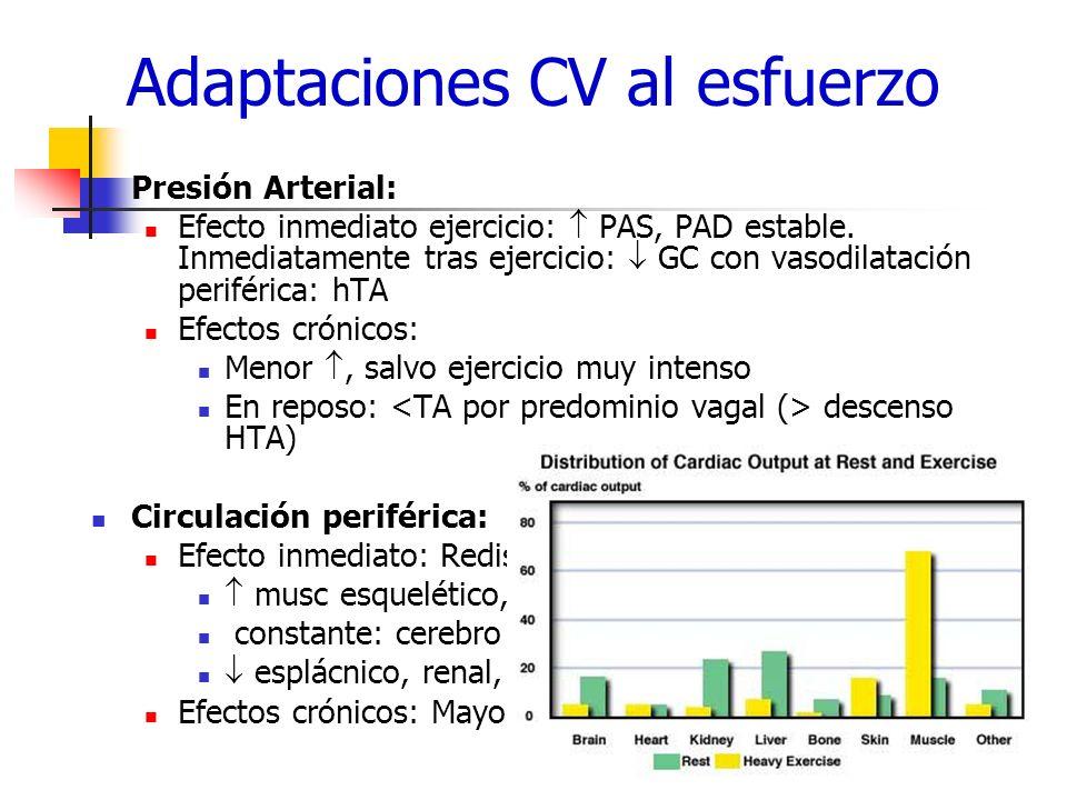 Adaptaciones CV al esfuerzo Presión Arterial: Efecto inmediato ejercicio: PAS, PAD estable. Inmediatamente tras ejercicio: GC con vasodilatación perif