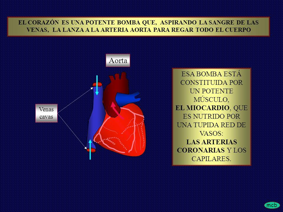 mcb TAMBIÉN SE PUEDE PRODUCIR DEFECTO EN EL CIERRE DE LA VALVULA MITRAL APARECIENDOINSUFICIENCIACARDIACA CON CONGESTIÓN PULMONAR CONSECUENCIAS DEL INFARTO DE MIOCARDIO IV CONSECUENCIAS DEL INFARTO DE MIOCARDIO IV