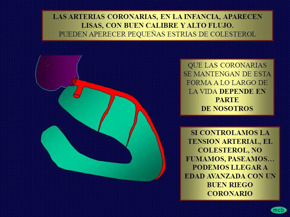 mcb LAS ARTERIAS CORONARIAS, EN LA INFANCIA, APARECEN LISAS, CON BUEN CALIBRE Y ALTO FLUJO. PUEDEN APERECER PEQUEÑAS ESTRIAS DE COLESTEROL QUE LAS COR