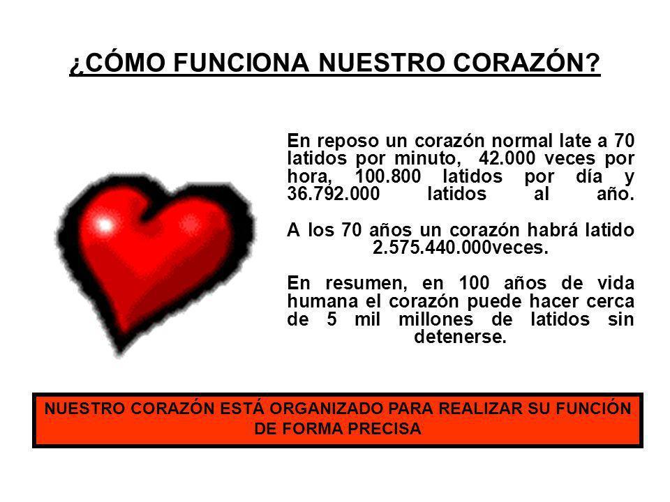 ¿CÓMO FUNCIONA NUESTRO CORAZÓN? En reposo un corazón normal late a 70 latidos por minuto, 42.000 veces por hora, 100.800 latidos por día y 36.792.000