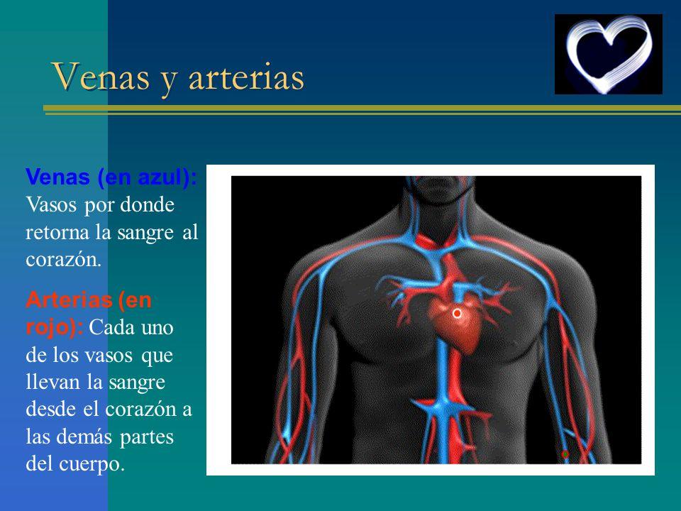 Venas y arterias Venas (en azul): Vasos por donde retorna la sangre al corazón. Arterias (en rojo): Cada uno de los vasos que llevan la sangre desde e