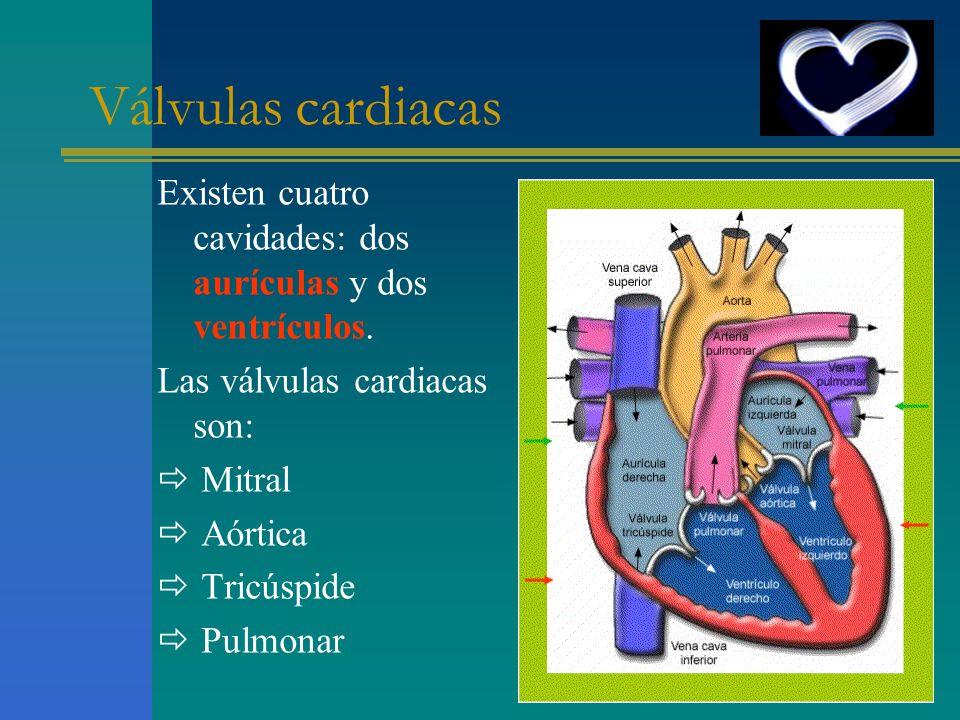 Existen cuatro cavidades: dos aurículas y dos ventrículos. Las válvulas cardiacas son: Mitral Aórtica Tricúspide Pulmonar Válvulas cardiacas