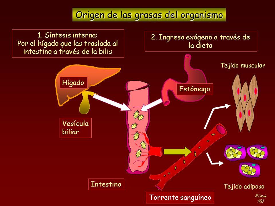 M.Cascón HUS Los lípidos son insolubles en el agua, por lo que para su transporte a través de la sangre, se asocian a otros compuestos que son proteínas, formando las denominadas LIPOPROTEINAS.