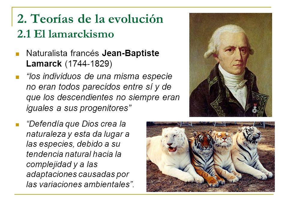 2. Teorías de la evolución 2.1 El lamarckismo Naturalista francés Jean-Baptiste Lamarck (1744-1829) los individuos de una misma especie no eran todos