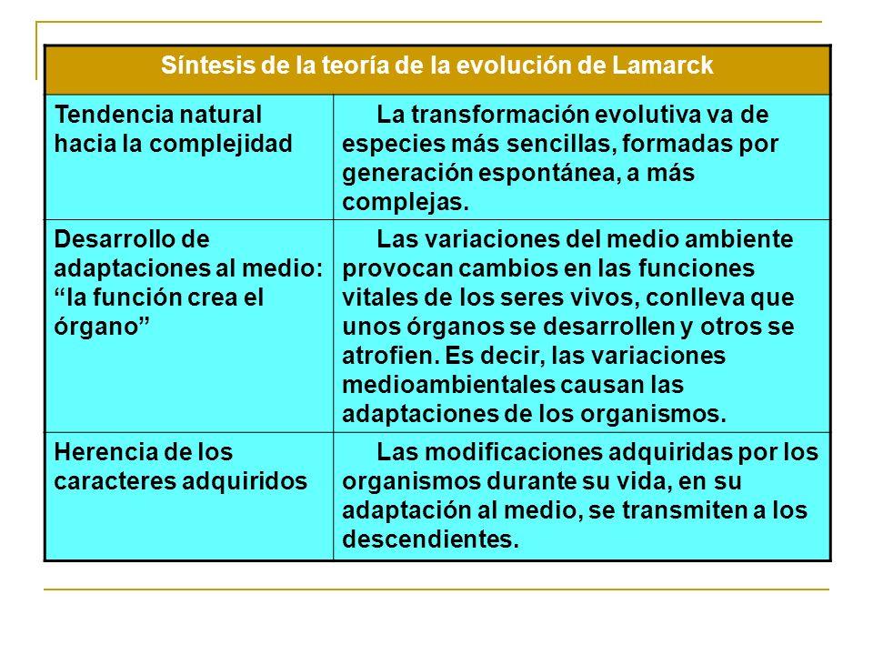 Síntesis de la teoría de la evolución de Lamarck Tendencia natural hacia la complejidad La transformación evolutiva va de especies más sencillas, form