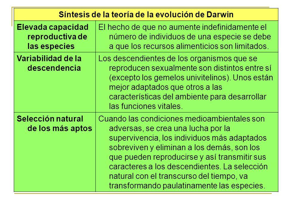 Síntesis de la teoría de la evolución de Darwin Elevada capacidad reproductiva de las especies El hecho de que no aumente indefinidamente el número de
