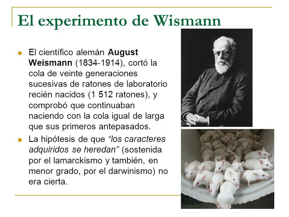 El experimento de Wismann El científico alemán August Weismann (1834-1914), cortó la cola de veinte generaciones sucesivas de ratones de laboratorio r