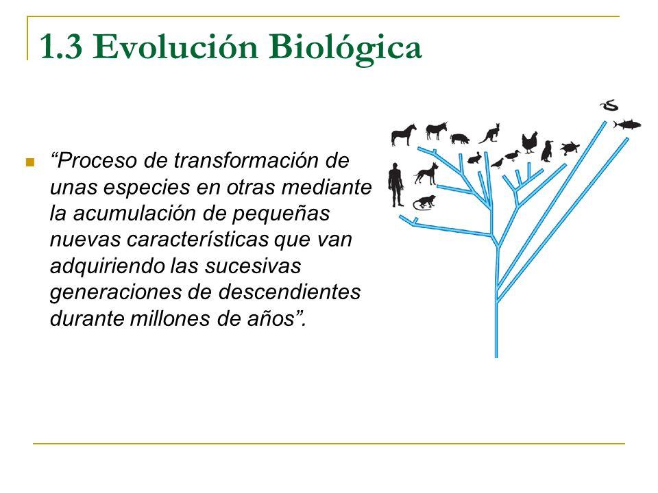 1.3 Evolución Biológica Proceso de transformación de unas especies en otras mediante la acumulación de pequeñas nuevas características que van adquiri