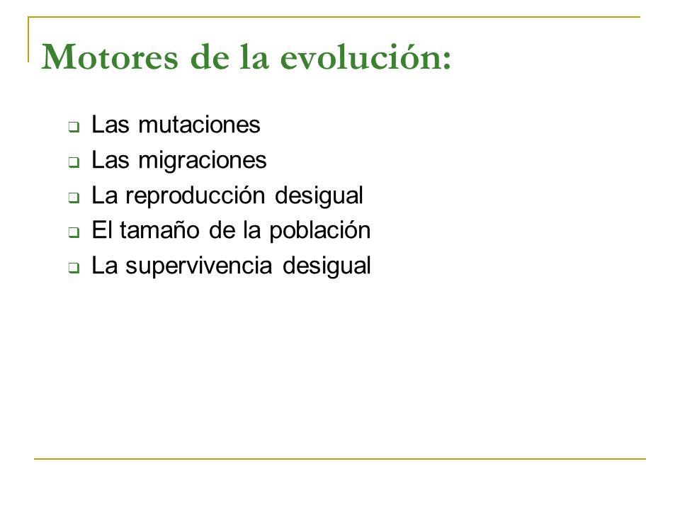 Motores de la evolución: Las mutaciones Las migraciones La reproducción desigual El tamaño de la población La supervivencia desigual