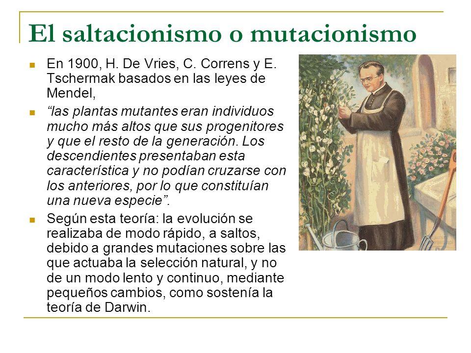 El saltacionismo o mutacionismo En 1900, H. De Vries, C. Correns y E. Tschermak basados en las leyes de Mendel, las plantas mutantes eran individuos m