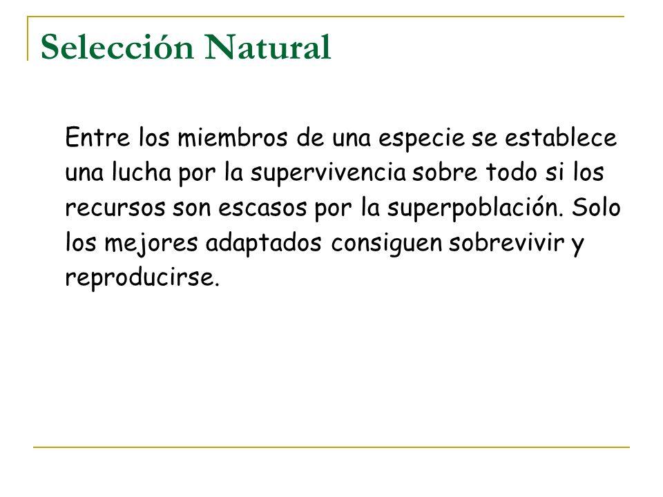 Selección Natural Entre los miembros de una especie se establece una lucha por la supervivencia sobre todo si los recursos son escasos por la superpob
