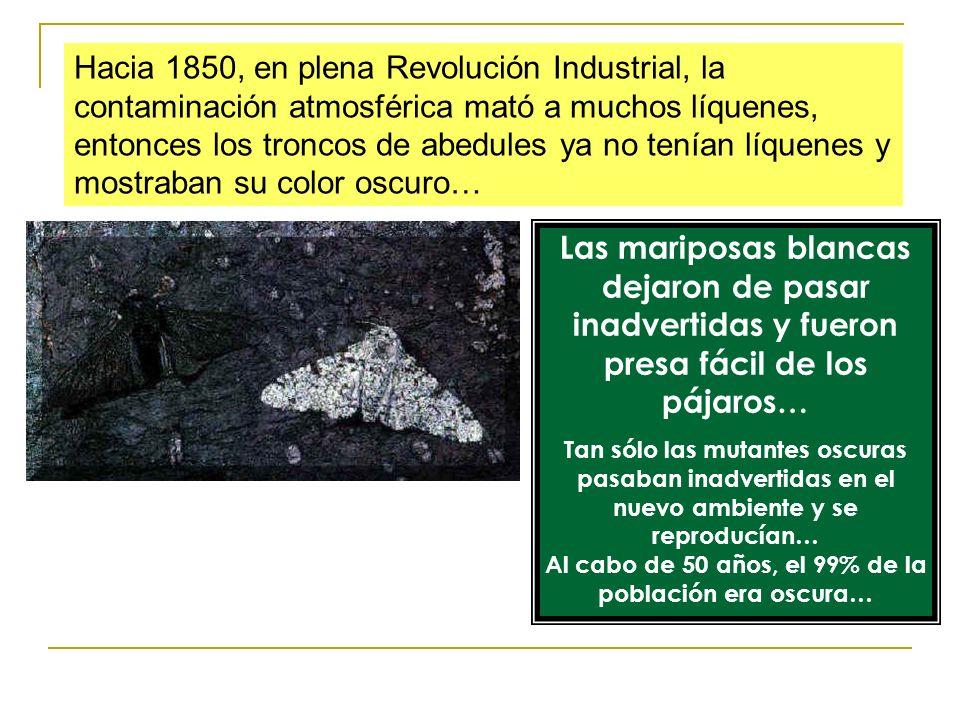 Hacia 1850, en plena Revolución Industrial, la contaminación atmosférica mató a muchos líquenes, entonces los troncos de abedules ya no tenían líquene
