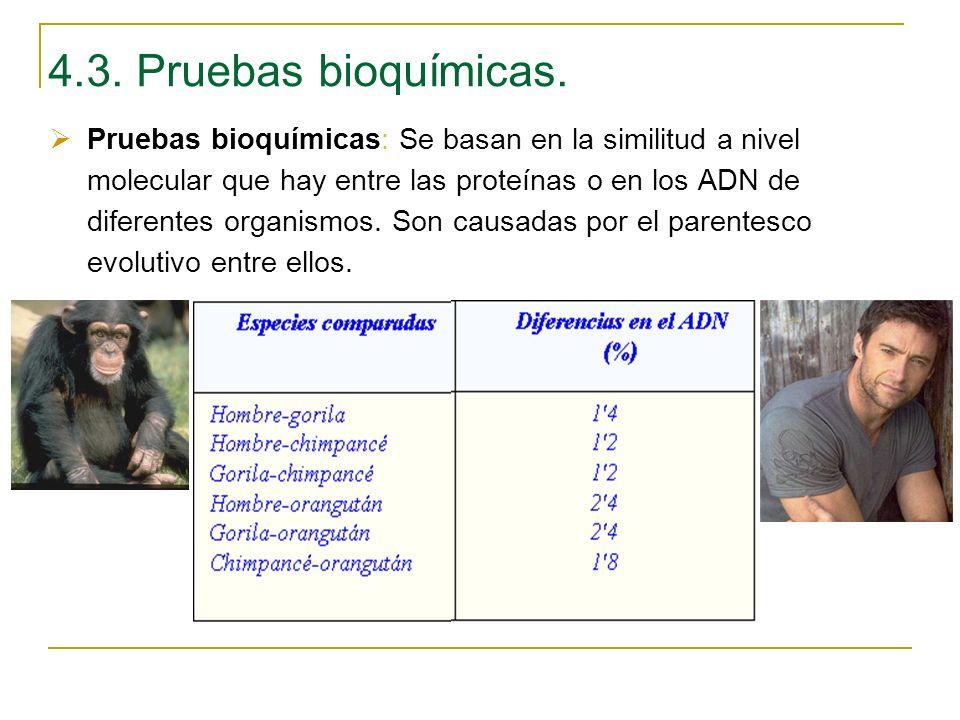 4.3. Pruebas bioquímicas. Pruebas bioquímicas: Se basan en la similitud a nivel molecular que hay entre las proteínas o en los ADN de diferentes organ