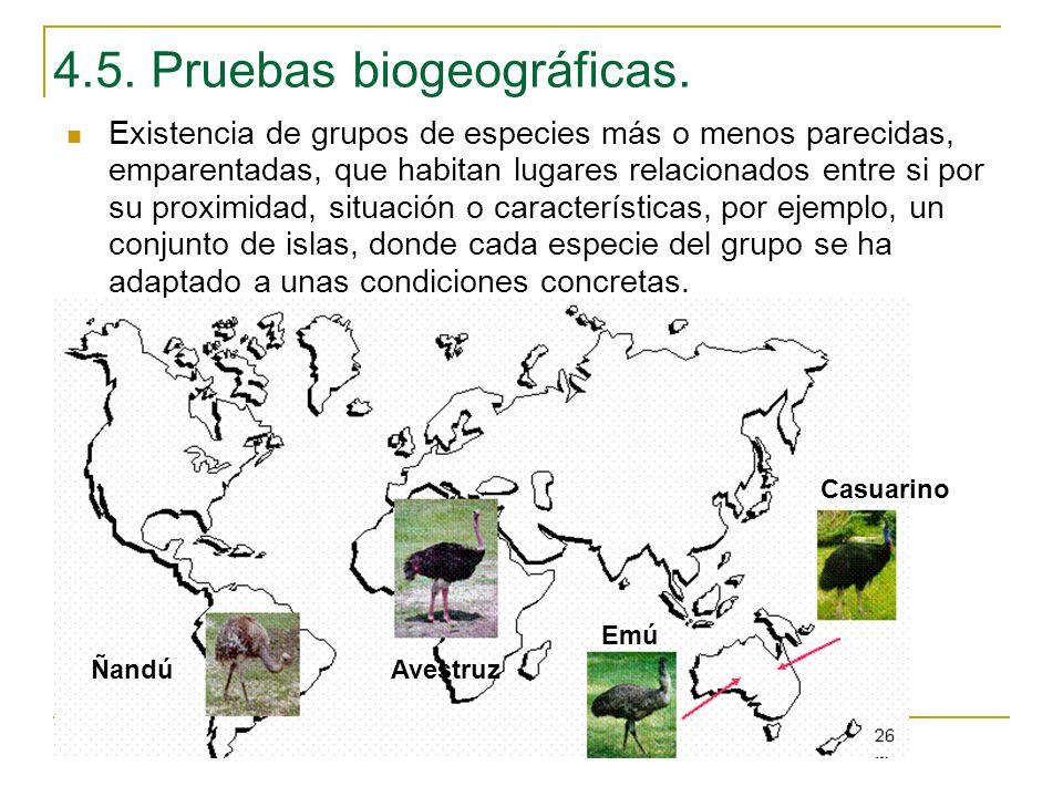 Existencia de grupos de especies más o menos parecidas, emparentadas, que habitan lugares relacionados entre si por su proximidad, situación o caracte