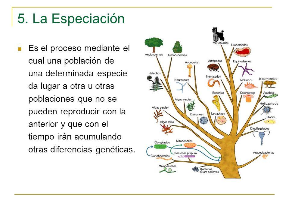 5. La Especiación Es el proceso mediante el cual una población de una determinada especie da lugar a otra u otras poblaciones que no se pueden reprodu