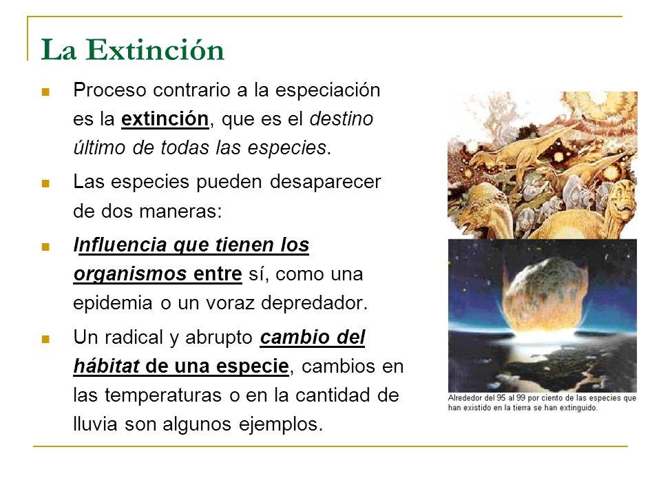 La Extinción Proceso contrario a la especiación es la extinción, que es el destino último de todas las especies. Las especies pueden desaparecer de do