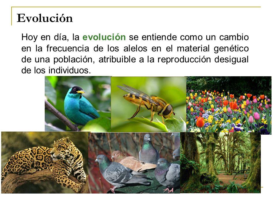 Hoy en día, la evolución se entiende como un cambio en la frecuencia de los alelos en el material genético de una población, atribuible a la reproducc