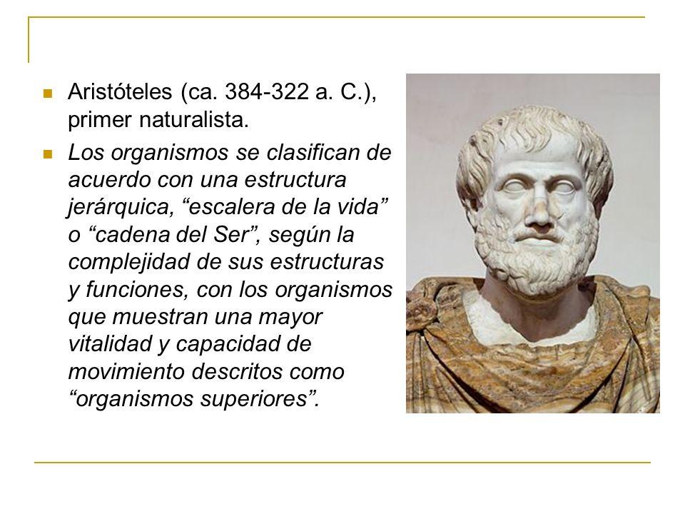 Aristóteles (ca. 384-322 a. C.), primer naturalista. Los organismos se clasifican de acuerdo con una estructura jerárquica, escalera de la vida o cade
