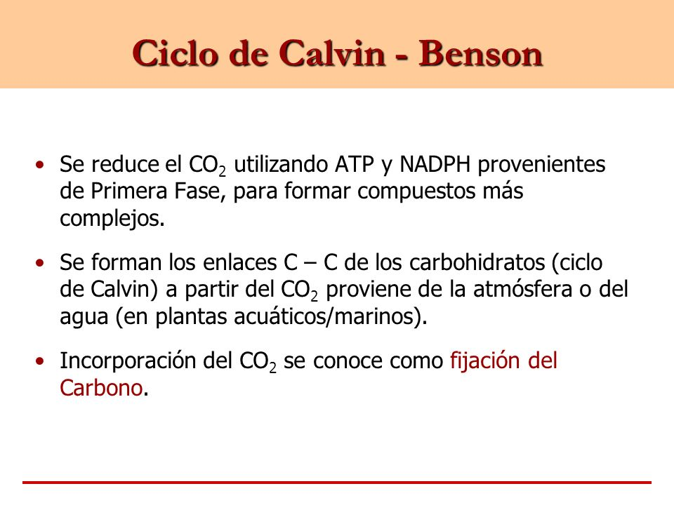 Ciclo de Calvin - Benson Se reduce el CO 2 utilizando ATP y NADPH provenientes de Primera Fase, para formar compuestos más complejos. Se forman los en