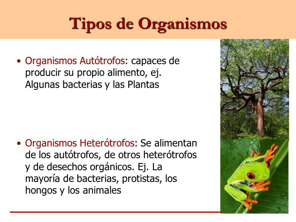 Tipos de Organismos Organismos Autótrofos: capaces de producir su propio alimento, ej. Algunas bacterias y las Plantas Organismos Heterótrofos: Se ali