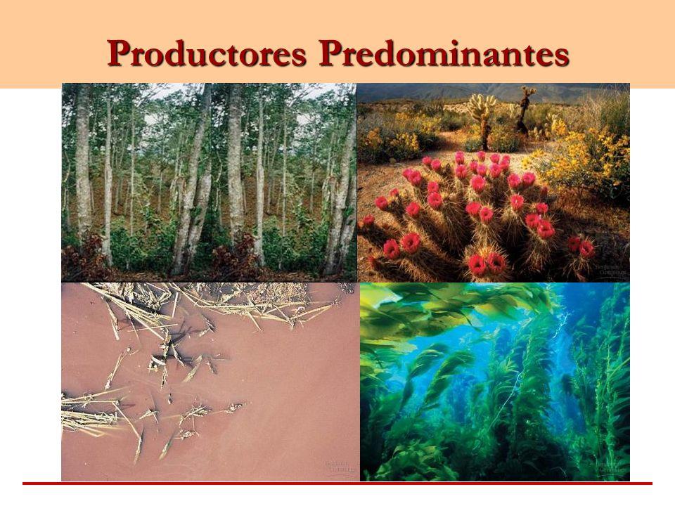 Productores Predominantes