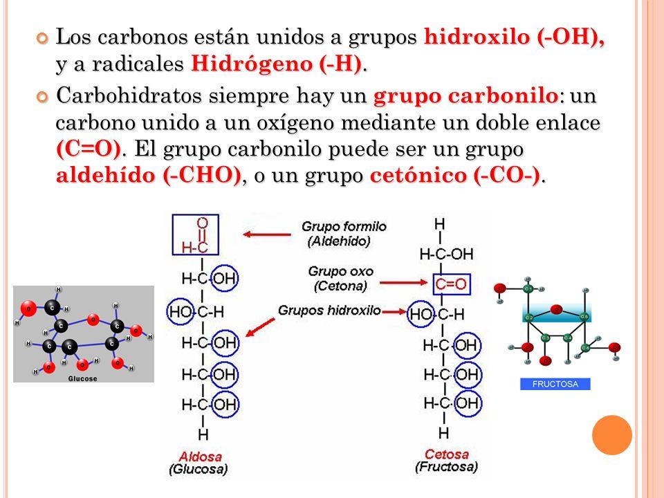 Los carbonos están unidos a grupos hidroxilo (-OH), y a radicales Hidrógeno (-H). Los carbonos están unidos a grupos hidroxilo (-OH), y a radicales Hi