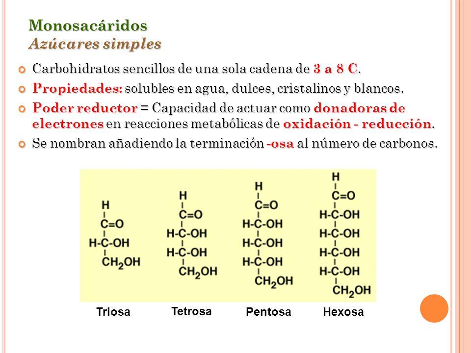 Monosacáridos Azúcares simples Carbohidratos sencillos de una sola cadena de 3 a 8 C. Carbohidratos sencillos de una sola cadena de 3 a 8 C. Propiedad