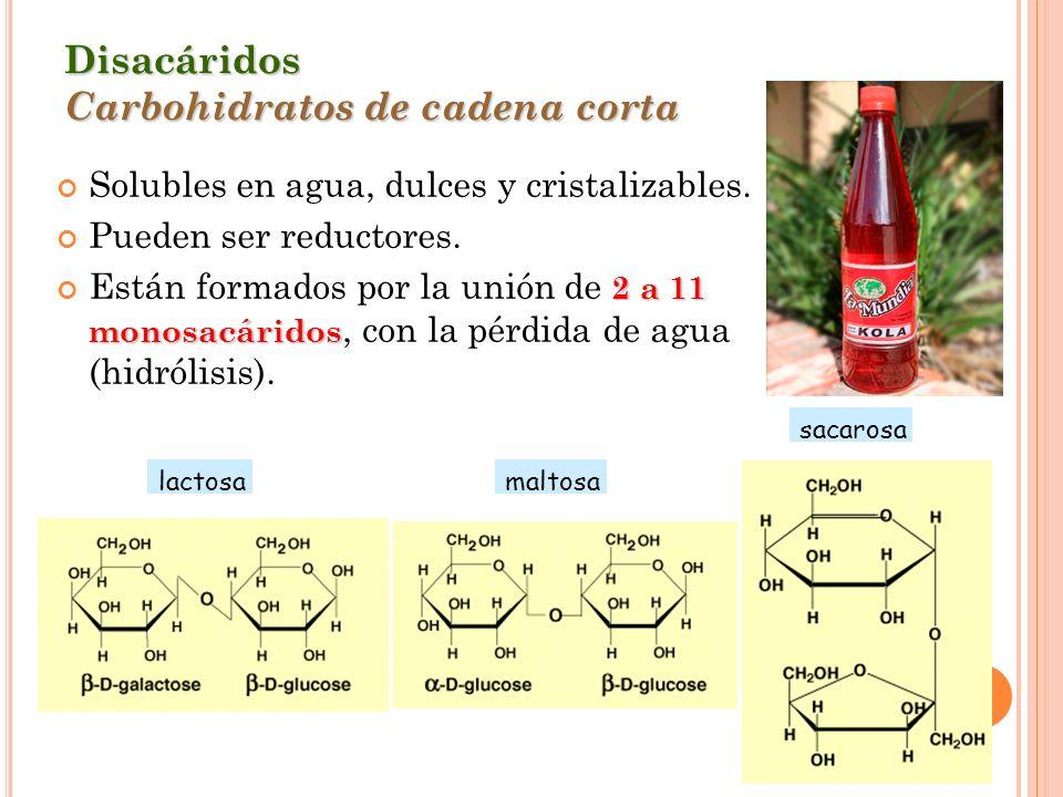Disacáridos Carbohidratos de cadena corta Solubles en agua, dulces y cristalizables. Pueden ser reductores. 2 a 11 monosacáridos Están formados por la
