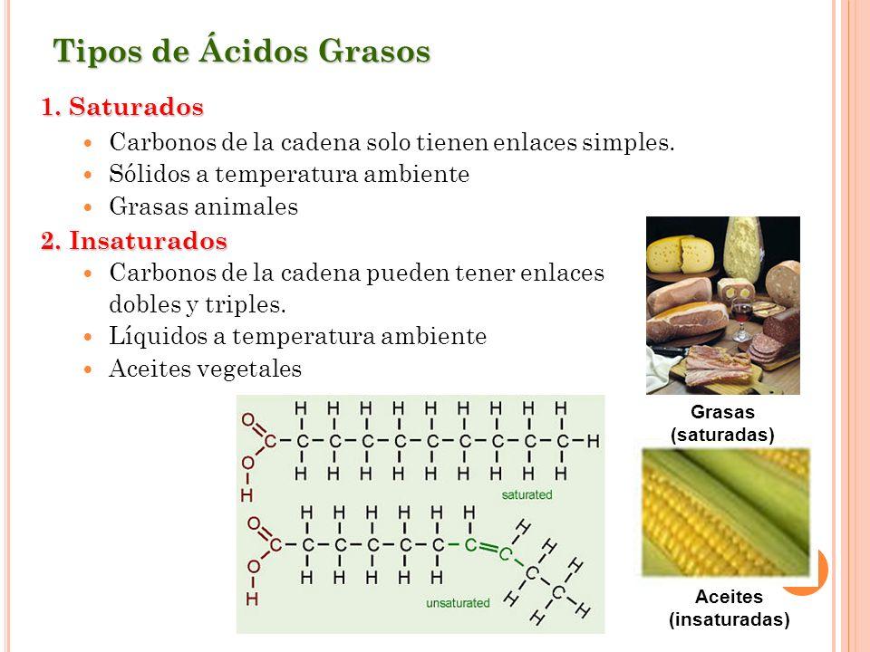 Tipos de Ácidos Grasos 1. Saturados Carbonos de la cadena solo tienen enlaces simples. Sólidos a temperatura ambiente Grasas animales 2. Insaturados C