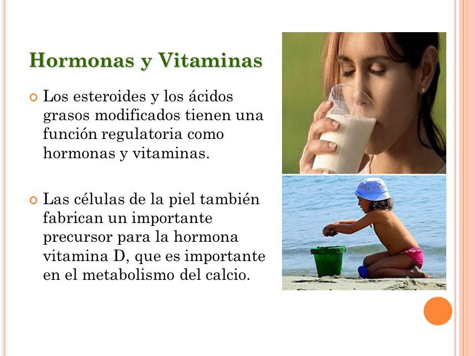 Hormonas y Vitaminas Los esteroides y los ácidos grasos modificados tienen una función regulatoria como hormonas y vitaminas. Las células de la piel t